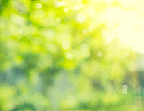 Abstract blurred nature background Stock Photography