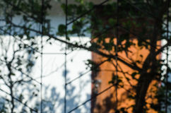 Abstract blurred outdoor window and tree Stock Images