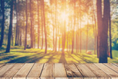 Abstract blurred pine tree and wood table with sunlight Stock Photo
