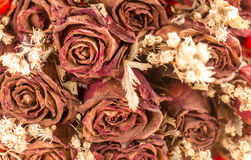 Abstract blurred and retro decoration of dried flowers. Roses Royalty Free Stock Image