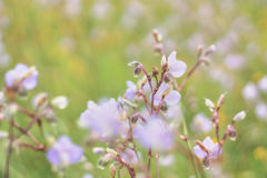 Abstract blurred and soft focus wild flower Royalty Free Stock Photos