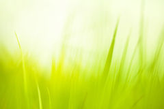 Abstract blurred sunny meadow Stock Images