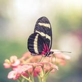 Pink Butterfly in Dreamy Flower Garden. Abstract blurry background around butterfly with red and yellow wings Royalty Free Stock Photo