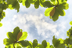 Abstract blurry cloud with leaves frame Stock Photography