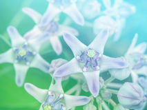 Abstract Blurry crown flower colorful background. Stock Photos