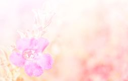 Abstract Blurry of Flower and colorful background. Stock Photo