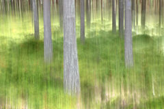 Abstract blurry forest scene Royalty Free Stock Photo