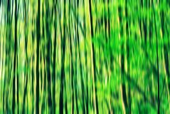 Abstract blurry forest Royalty Free Stock Image