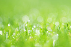 Abstract blurry grass background Royalty Free Stock Photo