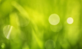 Abstract blurry grass Stock Photos