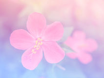 Abstract Blurry hibiscus Flower colorful background. Royalty Free Stock Images