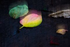 Abstract blurry pattern of leaves Royalty Free Stock Images