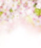 Abstract blurry spring background Royalty Free Stock Image