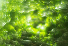 Abstract blurry spring nature bokeh background Royalty Free Stock Photography