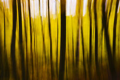 Abstract Blurry Yellow Fall Forest Stock Images