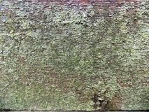Abstract board texture background. Cracked tree board wallpaper. Mystical crack backgrounds. Abstract board texture background. Cracked board wallpaper. Crack Stock Photos