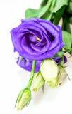 Abstract boeket van purpere bloem Stock Foto