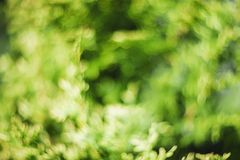 Abstract bokeh and blurred colorful nature background model used to stick text royalty free stock photos
