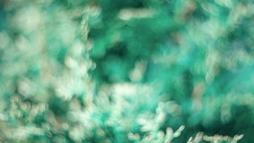 Abstract bokeh and blurred colorful nature background model used to stick text stock image
