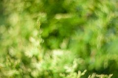 Abstract bokeh and blurred colorful nature background model used to stick text stock photography