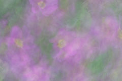 Abstract bokeh and blurry flowers as background or texture. Abstract bokeh and blurred flowers as background in subtle shades purple and green  colors.  Photo by Royalty Free Stock Image