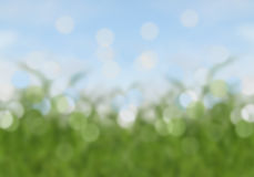 Abstract bokeh sky and grass summer background Stock Images