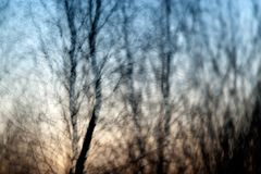 Abstract Bokeh of trees. Winter Stock Photography