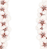 Abstract Border Made in Cherry Blossom Stock Image
