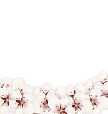 Abstract Border Made in Sakura Flowers Blossom Stock Photography