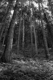 Abstract bos Stock Afbeeldingen