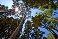 Abstract boslandschap op een de zomer zonnige dag in Sotchi, Rusland Stock Afbeeldingen