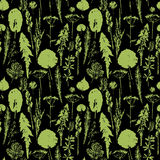 Abstract botanical seamless pattern. Vector herbal background. Royalty Free Stock Images