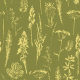 Abstract botanical seamless pattern. Vector herbal background. Stock Image