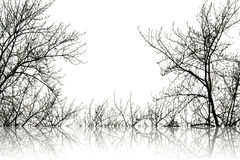 Abstract branch silhoutte Royalty Free Stock Image