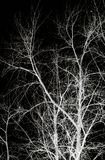 Abstract branch silhoutte Stock Photo