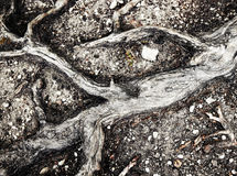 Abstract branched root of an old tree. Abstract nature background branched root of an old tree Stock Photos
