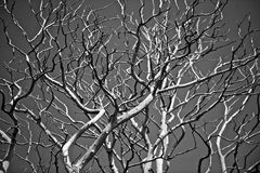Abstract Branches Royalty Free Stock Images