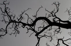 Abstract branches Stock Photos