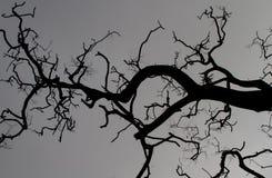 Abstract branches stock photos
