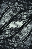 Abstract branches background Stock Photo
