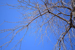 Abstract branches on a sky Royalty Free Stock Image