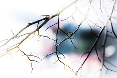 Abstract branches in spring wallpaper Stock Photo