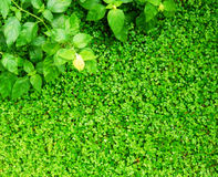 Abstract bright background with green leaves Stock Image