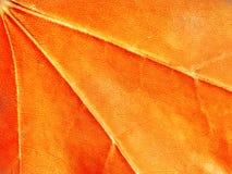 Red and orange background, maple leaf, macro, close-up stock photos