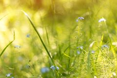 Abstract bright blurred nature background with spring and summer flowers, grass and plants. Macro photo with beautiful bokeh in the sunlight stock photography