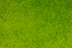 Abstract bright green spring background with blur and sparkles. Spring background. Summer background. Royalty Free Stock Photo