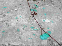 Abstract broken turquoise glass and climbing plants Royalty Free Stock Images