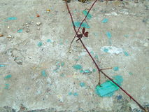 Abstract broken turquoise glass and climbing plants Stock Photos