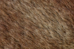 Abstract brown fur background (texture) Royalty Free Stock Images