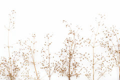 Abstract brown twig of dried bush with small open bolls seeds, flowers, isolated elements on white background for scrapbook Royalty Free Stock Image
